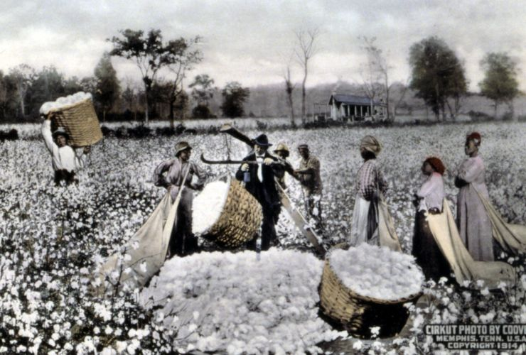 """White Cotton, Black Pickers"" / Courtesy of the Library of Congress"